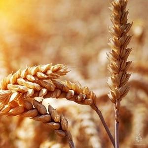 Закупаем сельхоз культуры