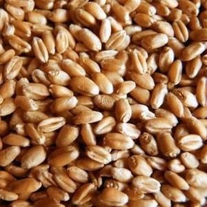 Продажа/покупка зерна, пшеницы, рапса